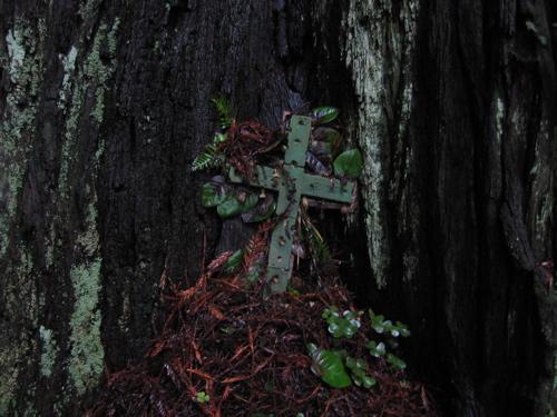 Redwood Crux